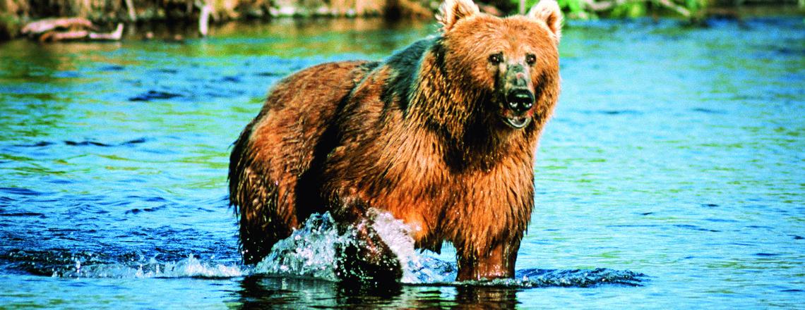 Grizlyho veľký brat
